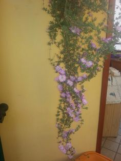 Piantina in fiore