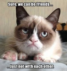 Grumpy cat frowns on your shenanigans. Grumpy cat is not impressed. I wonder if grumpy cat is an engineer. I did find some Grumpy Cat gifs: Grumpy Cat say \ Grumpy Cat Quotes, Meme Grumpy Cat, Gato Grumpy, Funny Cat Memes, Memes Humor, Funny Shit, Funny Cats, Funny Animals, Grumpy Kitty
