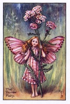 ≍ Nature's Fairy Nymphs ≍ magical elves, sprites, pixies and winged woodland faeries - Yarrow Flower Fairy - Cicely Mary Barker