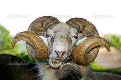 depositphotos_6542194-Goat-face.jpg 1,024×680 pixels