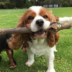 """Charlotte says, """"oh yes!"""" The stick says, """"oh noo!"""""""