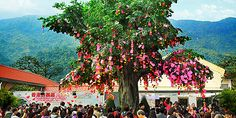 Lam Tsuen Wishing Trees