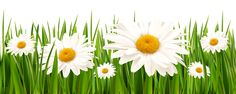 Grass and White Flowers PNG Clipart