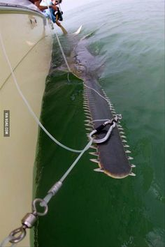 Funny pictures about The Saw Of The Sea. Oh, and cool pics about The Saw Of The Sea. Also, The Saw Of The Sea photos. Animals And Pets, Funny Animals, Cute Animals, Retarded Animals, Ocean Creatures, Weird Creatures, Beautiful Creatures, Animals Beautiful, Wale