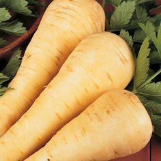 Parsnip 'Tender and True' - Carrot & Parsnip Seeds - Thompson & Morgan