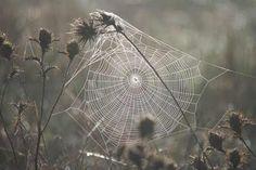 cobwebs and magick