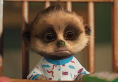 Oleg puts part of his dinner up his nose Cuddles And Snuggles, Cuddling, Baby Meerkat, Family Album, All Things Cute, Animals Images, Cute Funny Animals, Toddler Toys, Teddy Bear