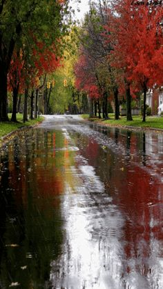 Autumn seems much more beautiful and magical when combined with rain! Its colours are reflected in the wet road. Nice and neat street on a calm rainy autumn day. Rainy Night, Rainy Days, Rainy Morning, Winter Gif, Beautiful Places, Beautiful Pictures, I Love Rain, Autumn Rain, When It Rains