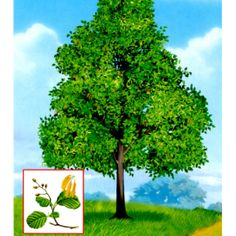 7 Autumn Nature, Montessori Materials, Garden Trees, Nature Crafts, Science, Card Games, National Parks, Clip Art, Herbs