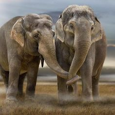 What an incredibly moving #photo of two lifelong mates by Werner Dreblow