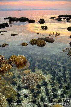 32. Mergui Archipelago, Myanmar - These #Secret #Travel #Places Will Blow You Away ... → Travel #Roman