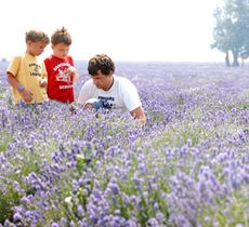 Young Living Lavender Farm. Great place to take family pictures, explore the fields and they have some quirky little old town reproduction. About 30 miles south of Provo off of I-15.