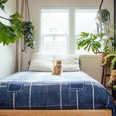 Indoor plants and indigo  Photos by @jaclyncampanaro