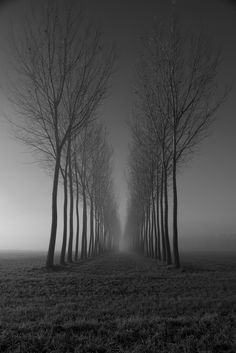 Black and white minimalist photography mist trees FOGGY TUNNEL vicino Pinerolo, italy. Turin Piemonte