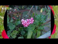 Kizoa Editar Videos - Movie Maker: Flores de las cuatro estaciones de mi...