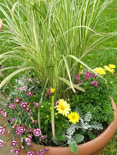 A Drought Tolerant Ornamental Grass and Flower Container Garden