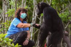 Chimp Abandoned On Island Holds Hands With The Woman Trying To Save Him