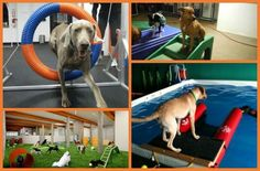There's no excuse to sit on the couch with your dog all winter – get moving and check out indoor dog parks near you! When the cold winds of winter s... *** Learn more about dogs by visiting the image link.