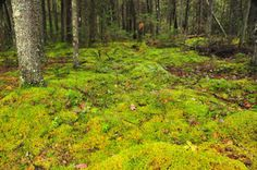 Tips for growing moss in your garden or yard - The Portland Press Herald / Maine Sunday Telegram   pressherald.com