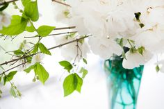 LEEF Bridal Shoot Bridal Shoot, Glass Vase, Plants, Garden, Home Decor, Flowers, Garten, Planters, Interior Design