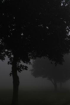 #black #schwarz #noir #nero #negro #μαύρος #черный #काला #ブラック #黑 #nature #Natur…