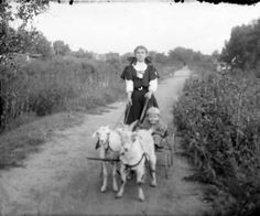 A girl holds the reins of a cart pulled by two goats on a path in Denver, Colorado. A child rides in the cart. Date[between 1904 and 1915?]