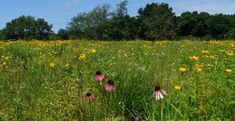 This Easy Wildflower Hike In Wisconsin Will Transport You Into A Sea Of Color