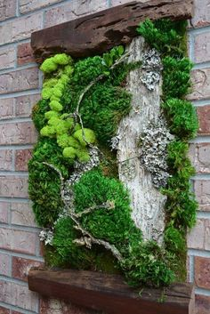GARDENING W/CONTAINERS - Beautifully framed work of art using assorted species of moss, driftwood, lichens etc. ❤