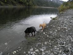 Rowdy and Little Shit play along the Illahe River
