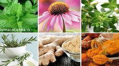6 silných protizápalových byliniek a ako ich správne používať Herb Garden, Korn, Cholesterol, Health Fitness, Beauty Makeup, Herbs, Homemade, Table Decorations, Plants