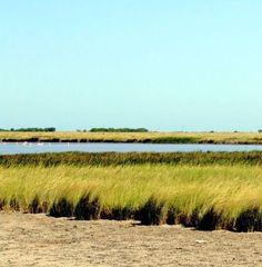 Reserva Natural Campos del Tuyú, cerca de Mar del Tuyú, sobre la costa atlántica
