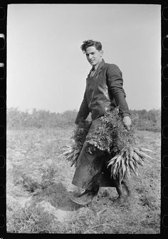 [ Loading carrots on truck, Camden County, New Jersey]