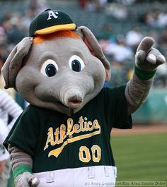 pretty nice 26997 4461b Shoutout to the Oakland Athletics mascot Stumper!! Oakland Athletics,  Athlete