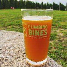 Climbing bines. #hop  #beer  #brewery  #hops  #hopfarm #fingerlakes #craftbeer #travel