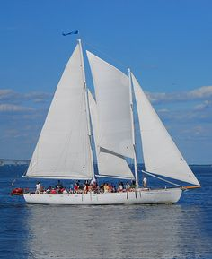 Public and Private Sailing Cruises on the Chesapeake Bay on the Schooner Woodwind