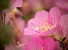 Gorgeous Pictures of Flowers by John Gasca