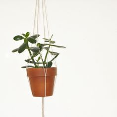 Using string or macrame cord, make your own hanging planter using only 10 knots. So simple and rewarding!
