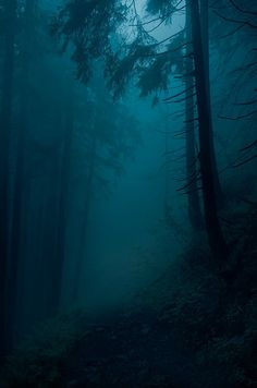 Raven S moody-nature: Landscape/Poland Magic Forest, Misty Forest, Forest At Night, Foggy Forest, Mystical Forest, Slytherin Aesthetic, Nature Aesthetic, Dark Photography, Scenic Photography