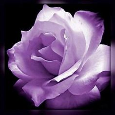My favorite color purple