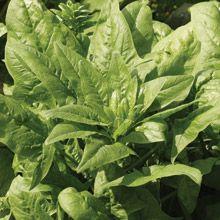 Tyee Organic Spinach: 50 days. can do the summer heat.