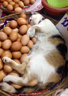 cat ♥ I guess, if you can't have the chicken, you settle for the egg!