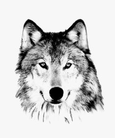 Love this wolf. Reminds me of a dog we had. @Cindy Goss- Columbia #art #wolf #animals #gift $30 Fox Drawing, Wolf Illustration, White Wolf, Black White, Wolf Tattoos, Black And White Illustration, Woodland Creatures, Wildlife Art, Character Design Inspiration