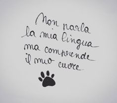 Dog Phrases, Small Dog Tattoos, Italian Quotes, Cat People, Word Tattoos, Animal Quotes, Wise Quotes, Say Hi, Dog Love