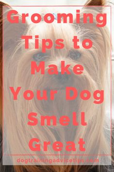 Grooming Tips to Make Your Dog Smell Great. Grooming Tips to Make Your Dog Smell Great. Online Dog Training, Basic Dog Training, Training Your Puppy, Puppy Care, Pet Care, Forever Puppy, Stinky Dog, Medication For Dogs, Diy Dog Toys