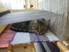 All around the world, there are cats hiding in looms. :) krosna | Prząśniczka