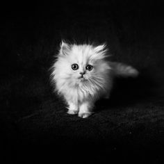 Cat by Lucien Vatynan on 500px
