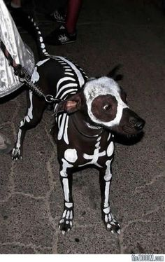 Skeleton dog Halloween costume hahahahahah Emmi would love it!!!!