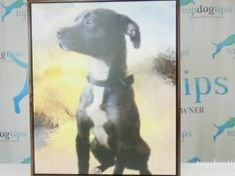 Review: Neal's Pet Paintings Giclée Portrait Dog Grooming Salons, Dog Grooming Business, Best Puppies, Toy Puppies, Puppy Food Homemade, Dog Ear Mites, Dog Christmas Gifts, Christmas Crafts, Dogs
