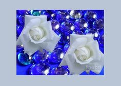 White Roses on Blue Glass Greeting Card