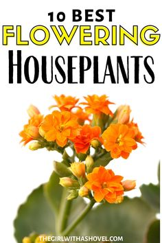 Do you love flowers? How about you add some to your indoor space! Check out this awesome list of flowering houseplants! LOVE HAVING FLOWERS IN YOUR HOME? CHECK OUT THESE 10 FLOWERING HOUSEPLANTS!!! Indoor Plants that Flower | Flowering Indoor Plants | Indoor Plants that have Flowers |